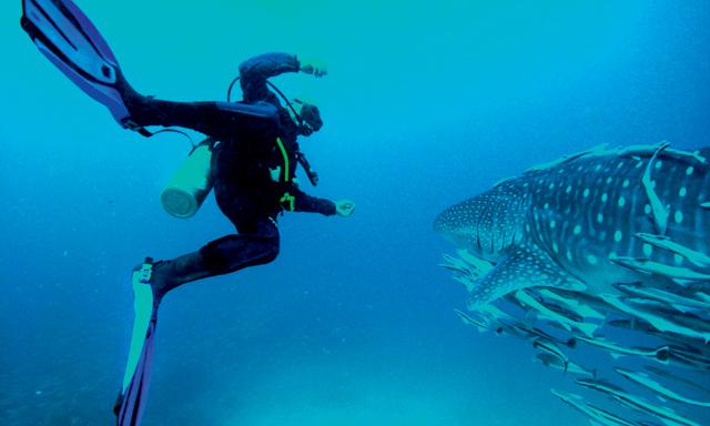 Scuba Diving in Dubai